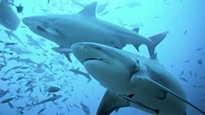 Мазь акулий жир для суставов отзывы