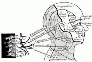 Болит челюсть при шейном остеохондрозе: причины и лечение