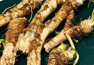 Рецепты лечения листьями хрена суставов при артрозах
